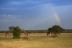 Tanzania_HR-136