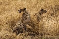 Tanzania_HR-145